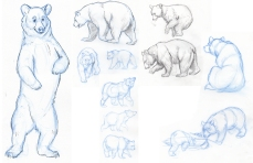 BearStudies character sketch